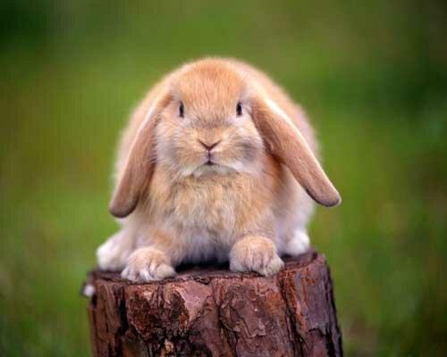Conejo-sobre-un-tronco