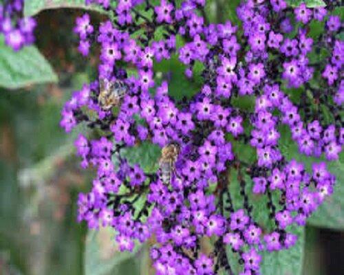 lila-bloemen-met-bijen groot